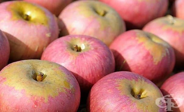 Съединения в сорт ябълка предпазват кожата от стареене - изображение