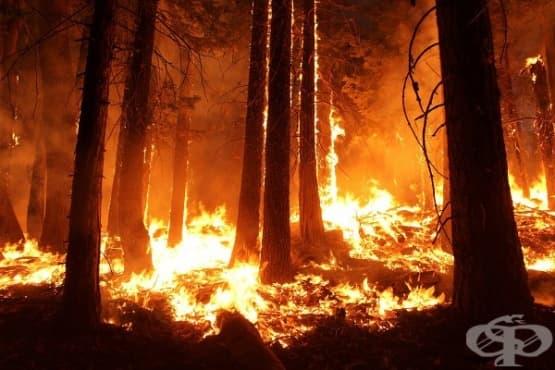 Сателитни данни разкриват драстично увеличение на пожарите в дъждовните гори на Амазонка - изображение