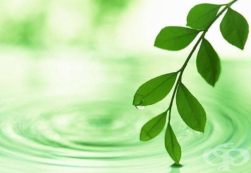 Доказаха научно, че растенията могат да общуват по между си - изображение