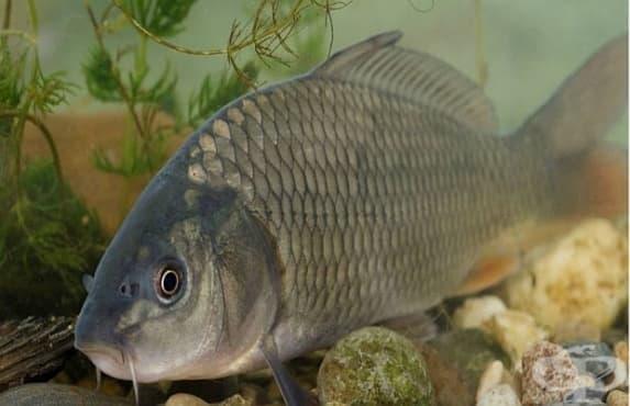 Всяка 5-та речна риба във Великобритания е станала транссексуална - изображение