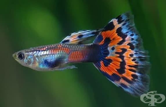 Установиха, че рибките имат сложна идентичност - изображение