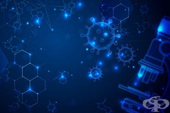 Ролята на клетките от човешки ембриони при създаването на ваксини  - изображение