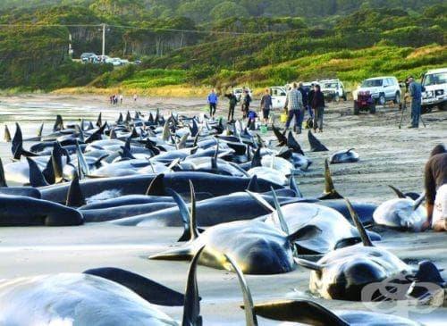 Мистериозно самоубийство на делфини по брега на Кейп Код - изображение