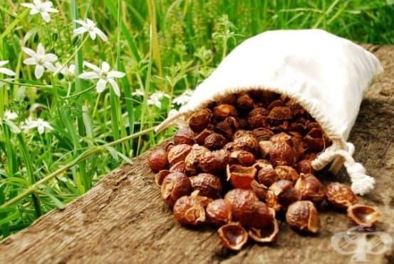 Сапунени орехи за здрава коса - изображение