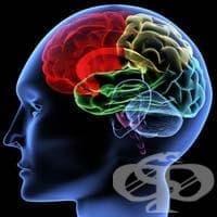 Наследствена болест ли е шизофренията? - изображение