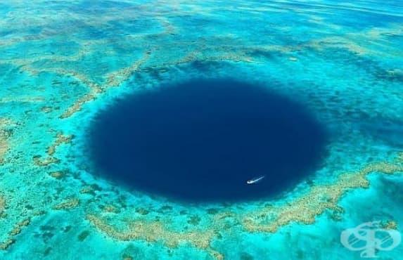 В синята дупка на Големия бариерен риф са открити здрави коралови колонии - изображение