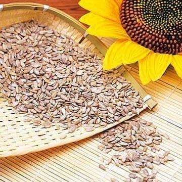Слънчогледовото семе - полезно и евтино лекарство - изображение
