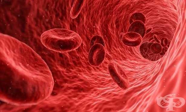 Церебрална венозна тромбоза: расте броят на случаите на тромб в мозъчните вени, алармират невролози - изображение
