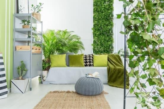 Според проучване стайните растения имат малък ефект върху качеството на въздуха в стаята - изображение