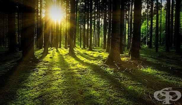 Според учени от Вермонт старите гори са по-устойчиви на климатичните промени - изображение