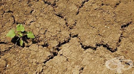 Сушите и повишаването на температурите застрашават хранителните доставки в глобален план - изображение