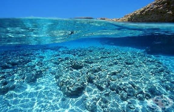 Днес отбелязваме Световния ден на океана - изображение