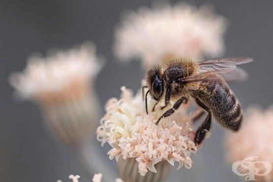 Проучване открива връзка между глобалното затопляне и големия спад в популацията на пчелите - изображение