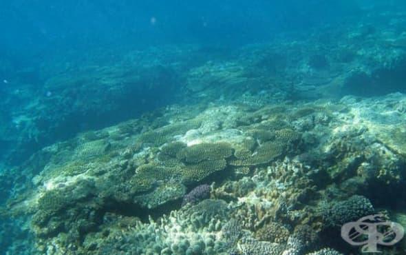 Високи концентрации на забранени химикали са открити на дъното на Тихия океан - изображение