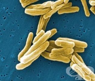 """Учени приспособиха """"магнитни"""" бактерии за подобряване бързината на технологиите ни - изображение"""