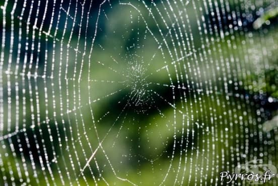 Учени разработиха слухов апарат, вдъхновени от нишките на паяка - изображение