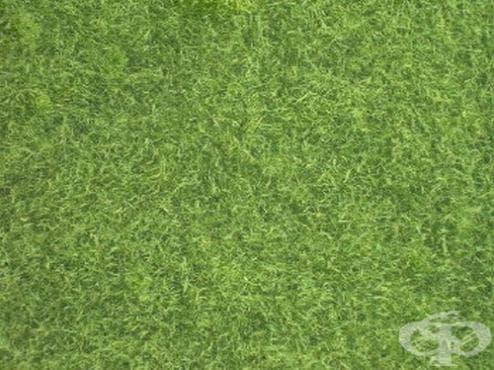 За тези удивителни... водорасли - изображение