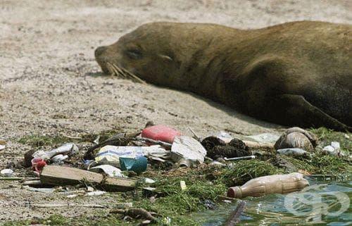 Според ООН, повечето опити за справяне с проблемите на околната среда са неефективни - изображение