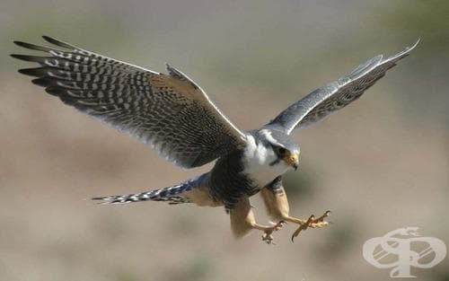 Застрашените птици ще бъдат опазени чрез изолиране на електрическите стълбове - изображение