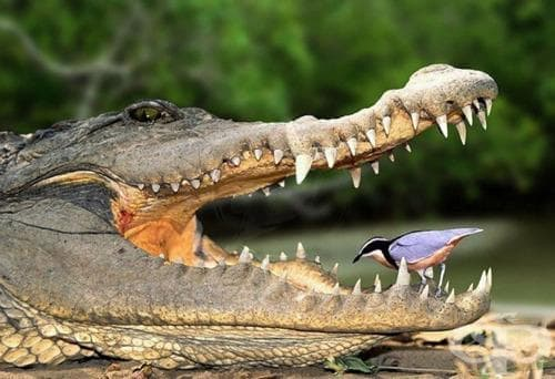 Знаете ли защо животните нямат кариеси? - изображение