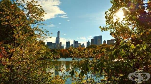Зелените пространства в градските квартали намаляват риска от сърдечносъдови заболявания - изображение