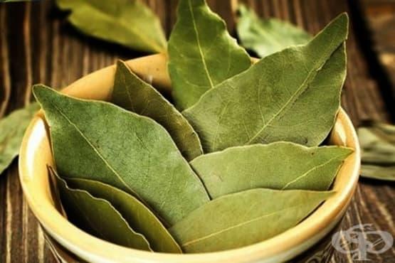 Дафиновият лист - средство за отслабване и лек от Древността - изображение