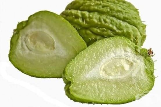 Чайот (мексиканска краставица) – полезни свойства на тропическия плод - изображение