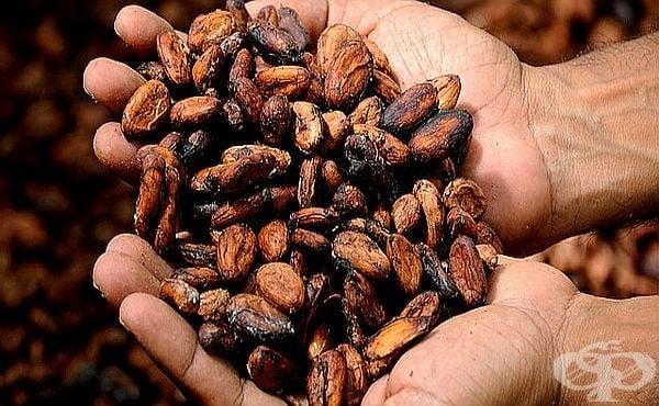 Какао на прах – ползи за здравето и противопоказания - изображение