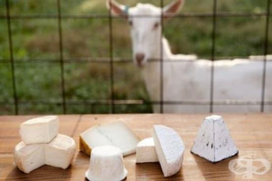 Козе сирене - изображение