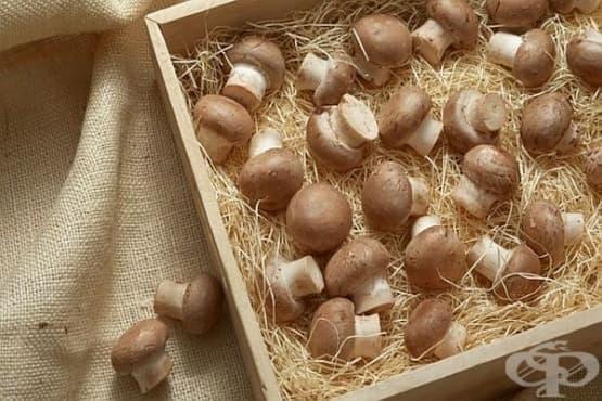 Печурки - изображение