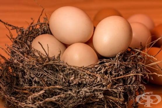 Какви са ползите от консумацията на яйца - изображение