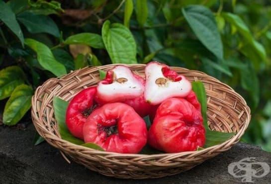 Чомпу (розова ябълка) - изображение