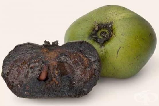 Шоколадова ябълка - изображение