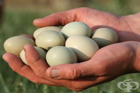 Яйце на фазан - изображение