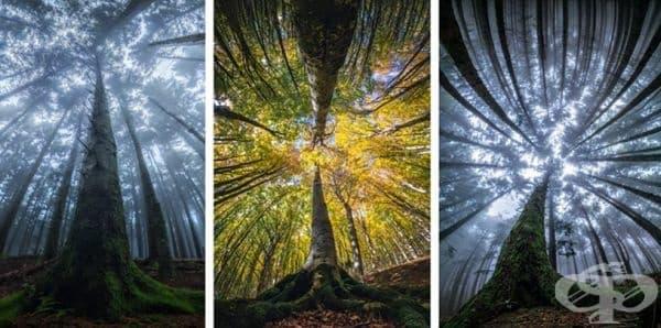 Магическата красота на гората, заснета отдолу нагоре - изображение