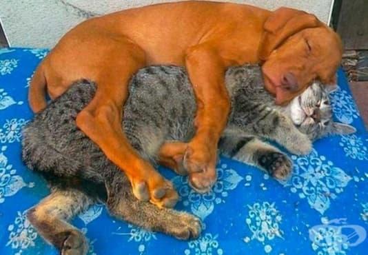 30 кучета и котки, станали най-добри приятели - изображение