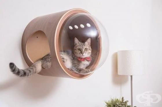Дизайнерска компания създава космически легла за котки - изображение