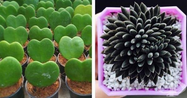 15 чудновати стайни растения, които ще освежат дома ви - изображение