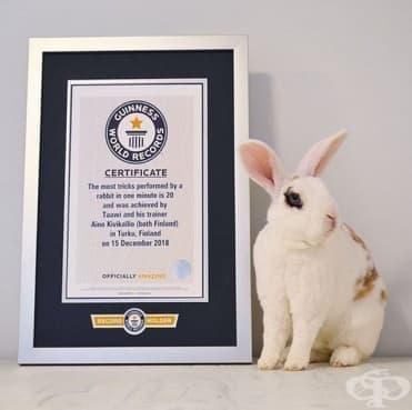Домашен заек от Финландия е вписан в Книгата за рекордите на Гинес с изпълнението на 20 трика в минута - изображение