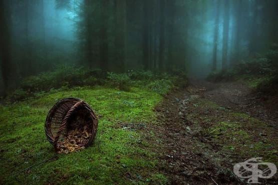 15 мистериозни гори, в които ще ни се иска буквално да се изгубим - изображение