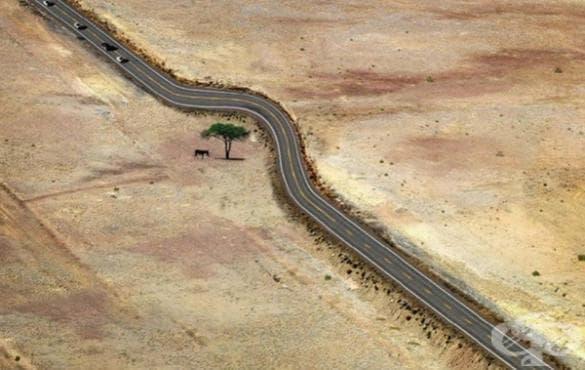 Най-вдъхновяващите начини, по които човечеството е уважило природата - изображение