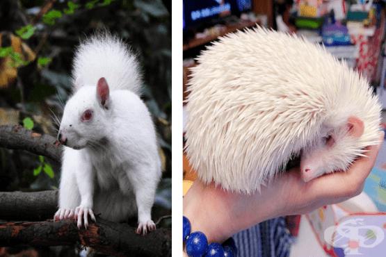 25 животни албиноси, които очароват с уникалния си вид - изображение