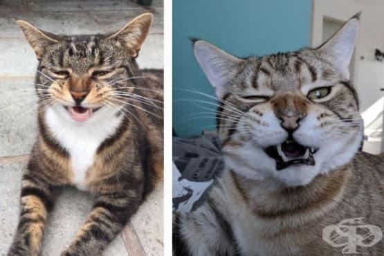 15 забавни снимки на котки, заснети в момент на кихане - изображение