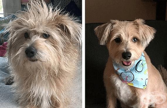 15 кучета преди и след фризьор - изображение