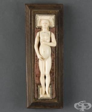 Анатомичен модел на бременна жена, изработен от слонова кост - изображение