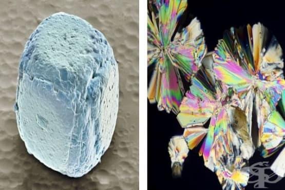 17 хранителни продукта под микроскоп, които едва ли сте виждали - изображение