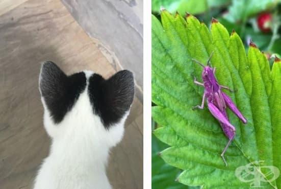 17 животни, на които природата е отделила специално внимание - изображение