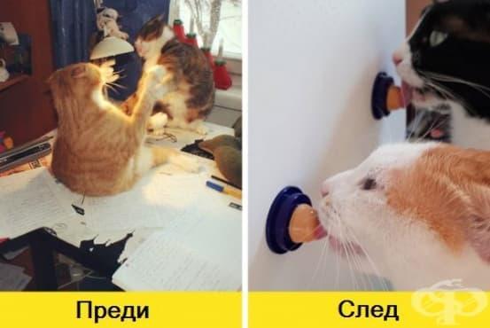 14 страхотни идеи, които могат да подобрят живота на котката ви у дома - изображение