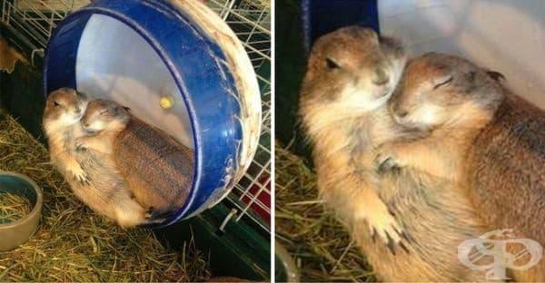 23 животни, които обичат да изразяват любовта си - изображение