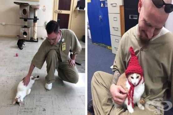 Затвор в Индиана позволява отглеждането на котки, които променят затворниците - изображение